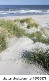 Ameland, Durch - Dune grass.