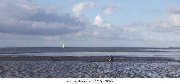 Ameland, Dutch - 15 September 2018.: Fishermans on Wadden sea.