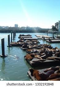 America Animals / Sleeping California Sea lion.