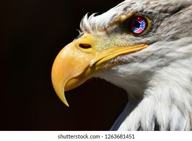 America Confederate states flag emblem on Eagle eye with mask and displace