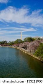 America DC/Sakura,Cherry blossoms of US-Japan friendship.National Monument.