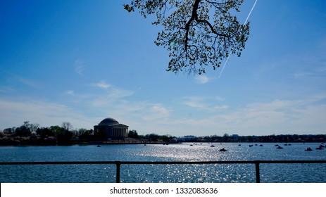 America DC/Sakura,Cherry blossoms of US-Japan friendship.Shining pond and cherry blossom silhouette.Jeferson Memorial.