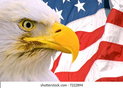 american bald eagle face superimposed over usa flag