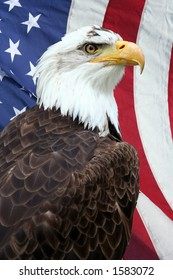 American bald eagle, with an American flag on the background