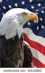 American bald eagle with the flag of the United States of America in the background