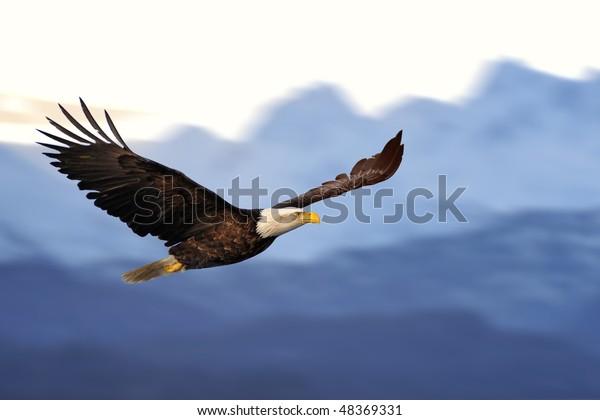 Amerikanischer Adler im Flug gegen illustrierte Alaska-Berge