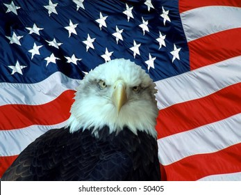 american bald eagle in-front of the american flag