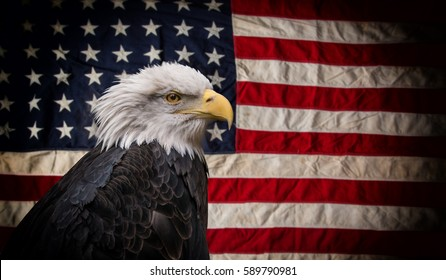 American Bald Eagle - symbol of america -with flag. United States of America patriotic symbols.