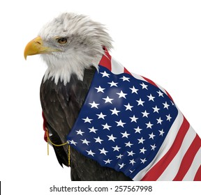 American bald eagle wearing the United States country flag