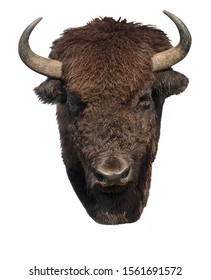 American bison, strength and courage symbol. Buffalo portrait on white background  closeup.