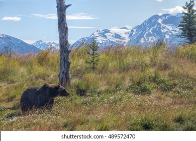 American black bear, or a black bear. The most common North American bear