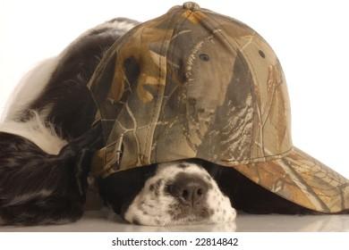 american cocker spaniel wearing camouflage ball cap