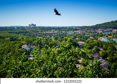 An American Crow in Branson at Southwest Missouri