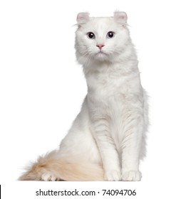 American Curl cat, 1 and a half years old, sitting in front of white background