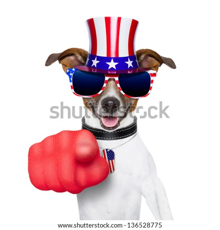 american dog pointing with