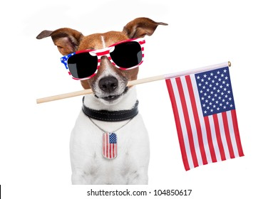 american dog with usa flag