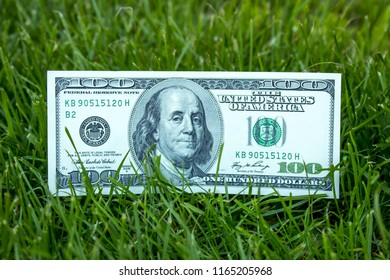 American dollars in the grass