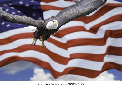 American Eagle and American Flag