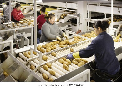 American Falls, Idaho, USA Apr. 30, 2011 Image of a conveyor belt in a food processing facility, and workers sorting russet potatoes.
