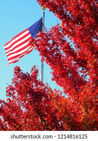 American Flag with autumn tree
