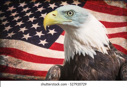 American Flag background in a grunge look with a bald eagle in front of it.