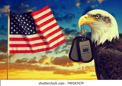 American flag and Bald Eagle holds a dog tags in his beak at sunset.Veterans Day Concept.