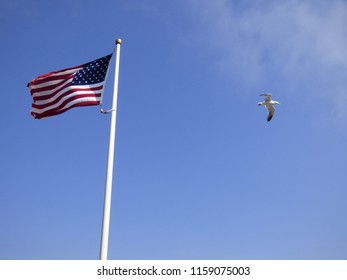 American flag with American eagle in the foreground