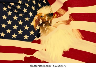 American flag with eagle.  Retro, nationaly USA symbol.