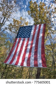 American flag at edge of forest