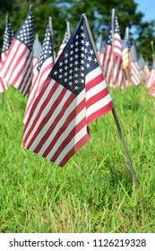american flags lined in a field for celebration