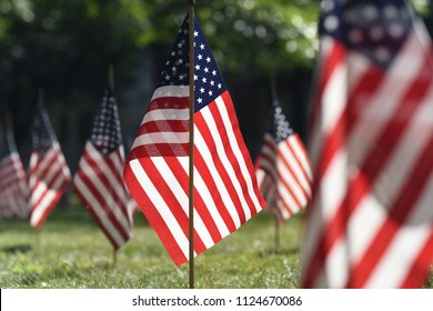 American flags on lawn