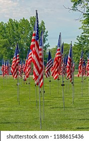 American Flags In A Park On Memorial Day