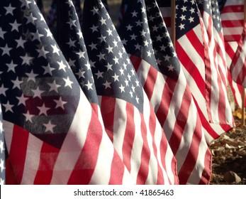 American Flags, in a row, honoring war veterans