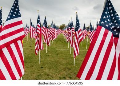 American Flags, Veterans Day