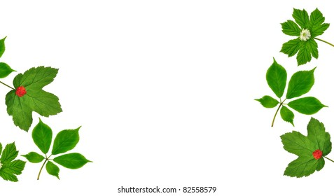 American Ginseng (Panax quinquefolius) and Goldenseal leaves (Hydrastis canadensis) - for your cards, labels, stationery, background, and other artistic needs.