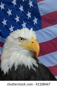 American Icon - Bald Headed Eagle
