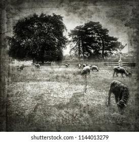 American Pastoral Farm