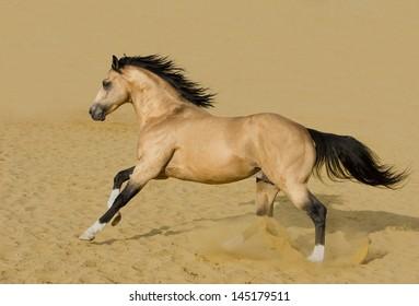 Quarter Horse Images Stock Photos Vectors Shutterstock