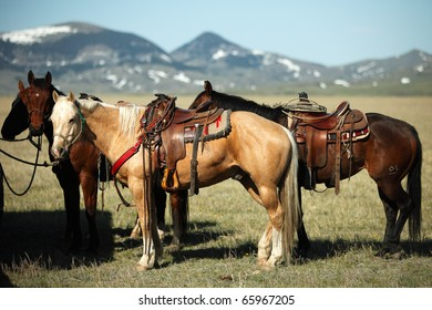 American quarter horses tied up on a ranch in the American west.