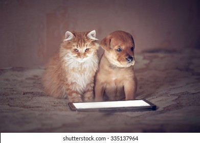 American staffordshire terrier dog with little kitten sitting in front of a tablet