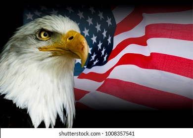 American symbol - USA flag with eagle with black background.