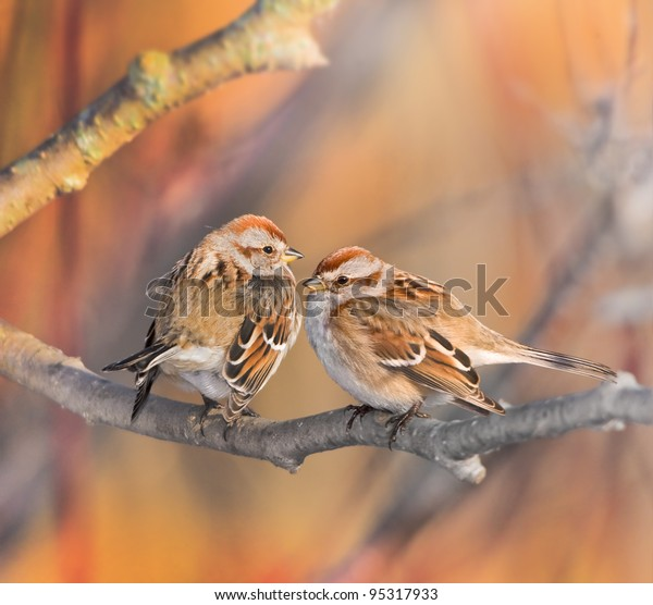 American Tree Sparrow, couple. Latin name - Spizella Arborea.