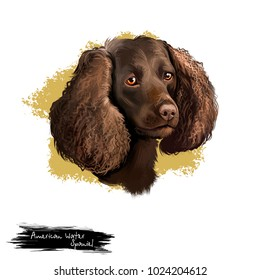 American Water Spaniel dog digital art illustration isolated on white background. AWS breed of spaniel, medium-sized hunting dog, double layered coat in variety of brown related shades, head portrait