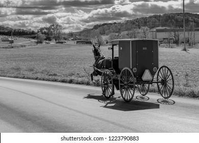 Amish Buggy in Holmes county Ohio. All four hoves of the horse off the ground as the ladies head home from shopping.