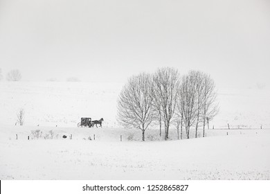 Amish buggy travels a country road in upstate New York during a snow storm.