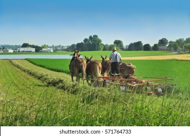 Amish farmer working in the field in Lancaster, PA. June 20, 2016