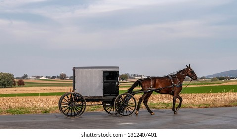 Amish Horse and Buggy Traveling on a Residential Road on a Summer Day