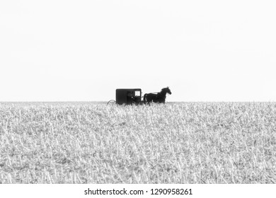An Amish horse drawn buggy in a harvested field of corn in black and white, Lancaster County, PA
