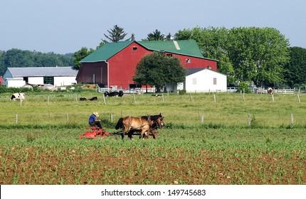 Amish man plowing field