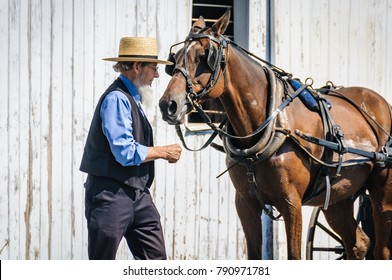 AMISH PENNSYLVANIA, USA - SEPTEMBER 16, 2017: Elderly bearded man with horse in Amish Country in Pennsylvania, USA